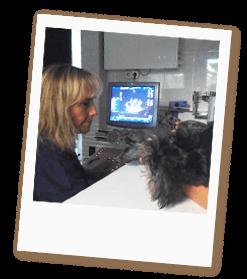 cardiologia-veterinaria