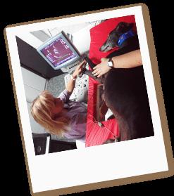 ecocardiografia-veterinaria