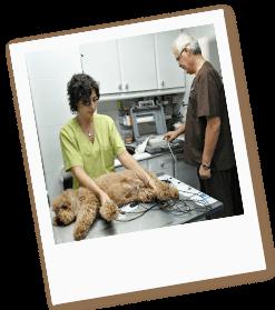 electrocardiograma-perros-gatos