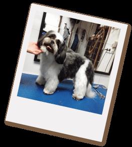 lavado-corte-estetico-perros