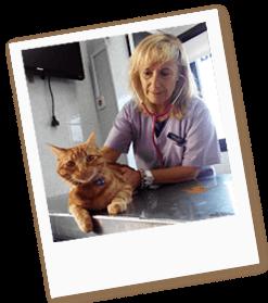 medicina-felina