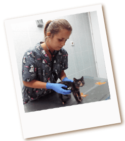 medicina-preventiva-veterinaria