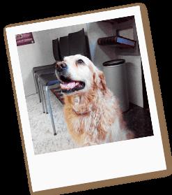 oncologia-veterinaria
