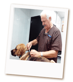 vacunacion-veterinaria