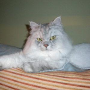mi-gato-orina
